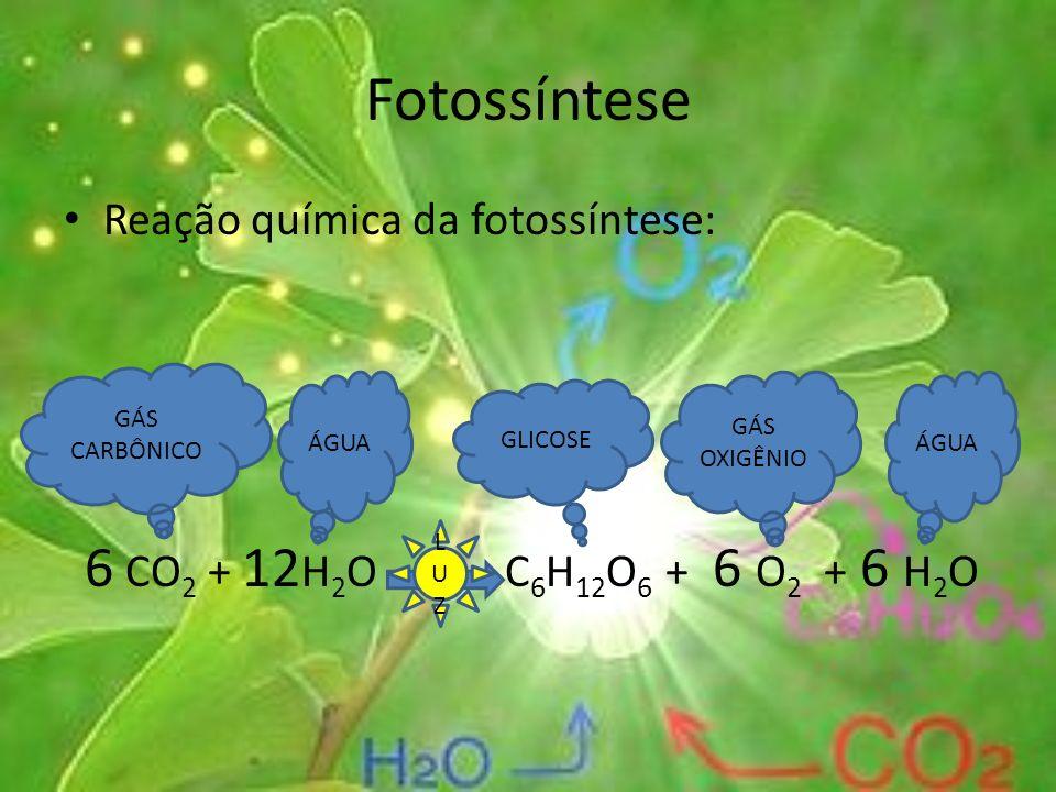 Fotossíntese Reação química da fotossíntese: 6 CO 2 + 12 H 2 O C 6 H 12 O 6 + 6 O 2 + 6 H2OH2O GÁS CARBÔNICO ÁGUA GLICOSE GÁS OXIGÊNIO ÁGUA LUZLUZ
