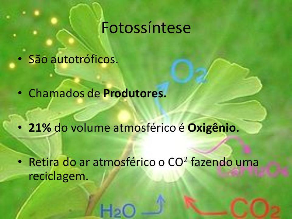 Fotossíntese São autotróficos. Chamados de Produtores. 21% do volume atmosférico é Oxigênio. Retira do ar atmosférico o CO 2 fazendo uma reciclagem.