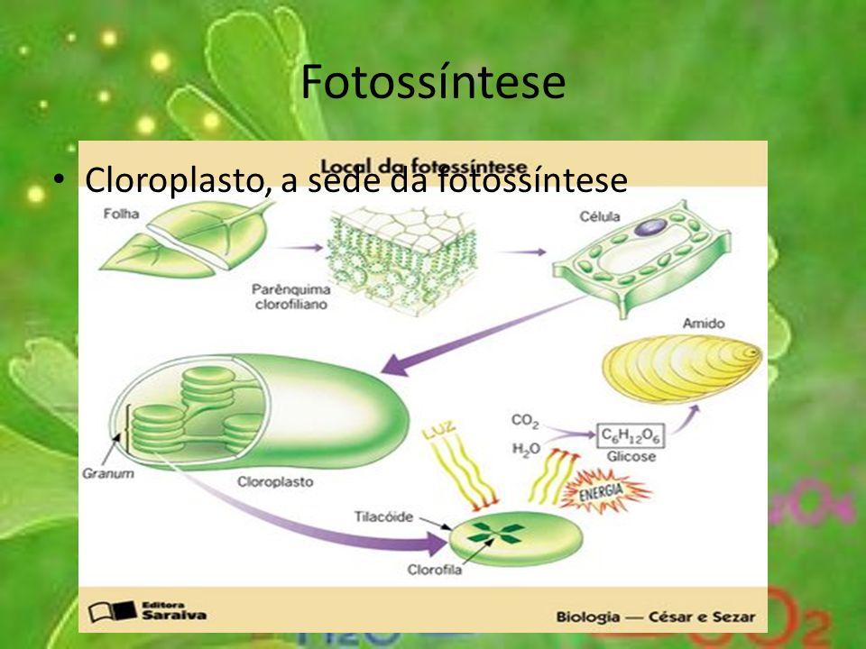 Fotossíntese Cloroplasto, a sede da fotossíntese