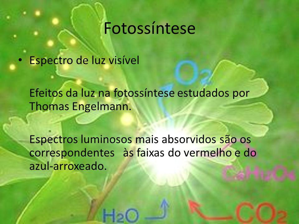 Fotossíntese Espectro de luz visível Efeitos da luz na fotossíntese estudados por Thomas Engelmann. Espectros luminosos mais absorvidos são os corresp