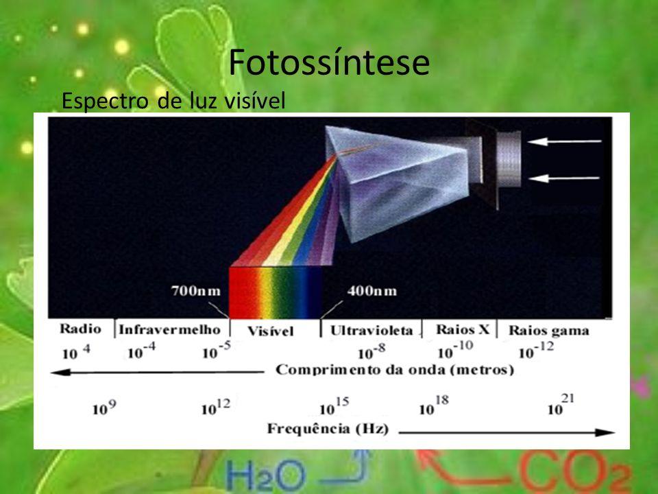 Fotossíntese Espectro de luz visível
