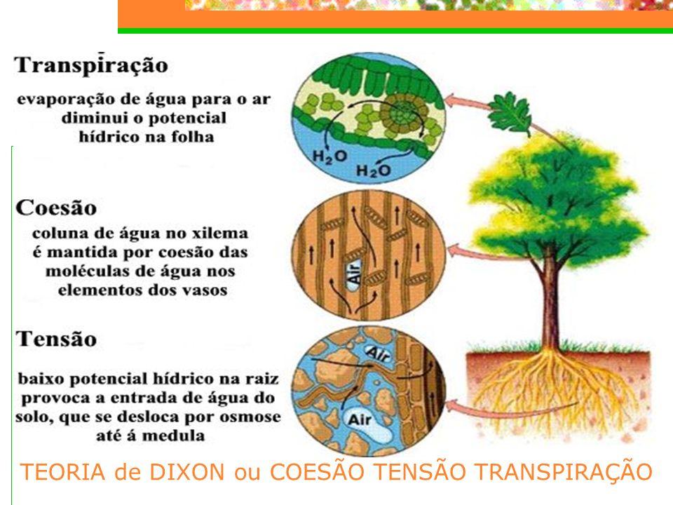TEORIA de DIXON ou COESÃO TENSÃO TRANSPIRAÇÃO