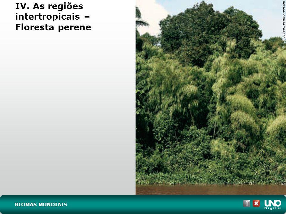 IV. As regiões intertropicais - Savana FERNANDO RODRIGUES/SHUTTERSTOCK BIOMAS MUNDIAIS