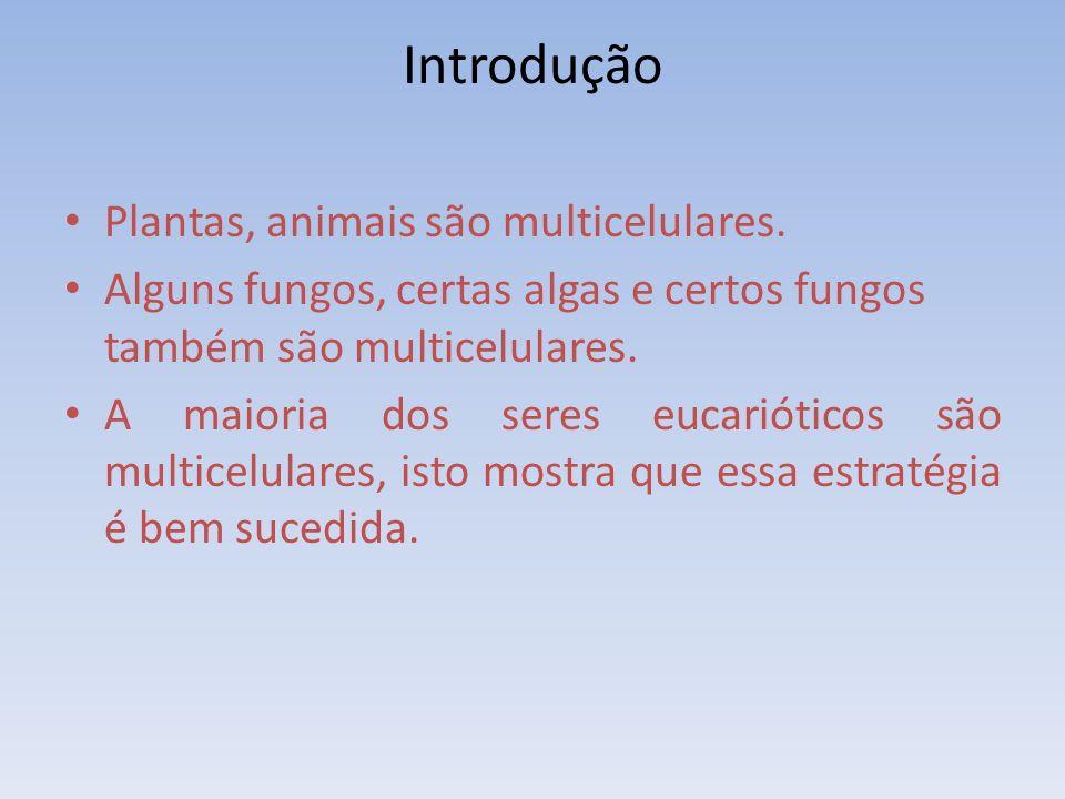 Introdução Plantas, animais são multicelulares. Alguns fungos, certas algas e certos fungos também são multicelulares. A maioria dos seres eucariótico