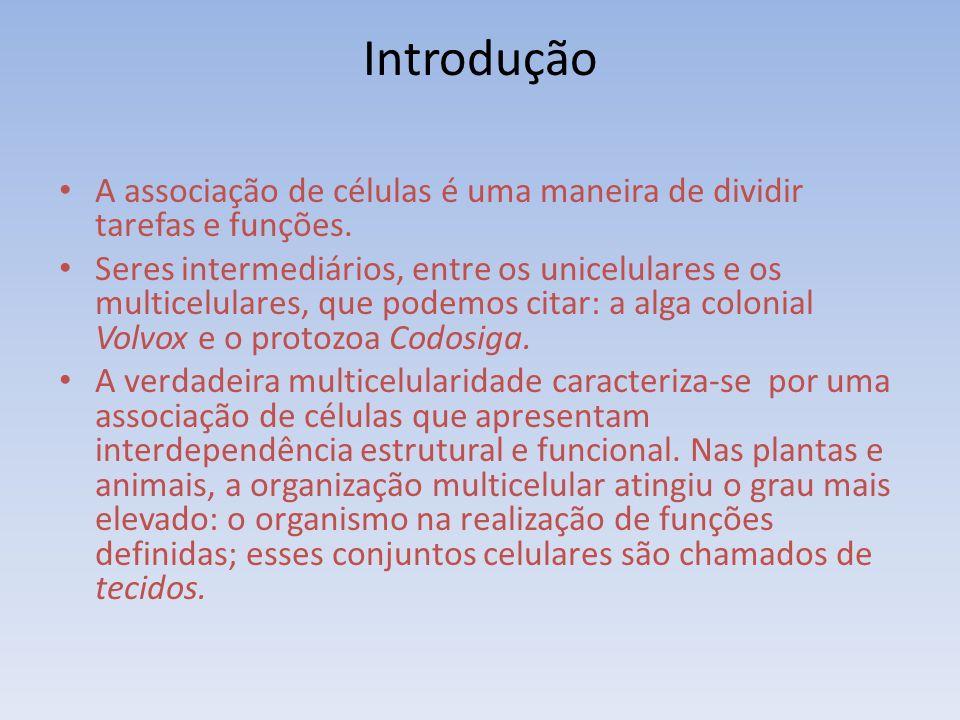 Introdução A associação de células é uma maneira de dividir tarefas e funções. Seres intermediários, entre os unicelulares e os multicelulares, que po