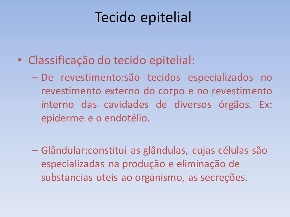 Tecido epitelial Classificação do tecido epitelial: – De revestimento:são tecidos especializados no revestimento externo do corpo e no revestimento in