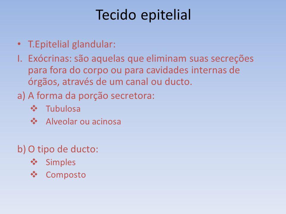 T.Epitelial glandular: I.Exócrinas: são aquelas que eliminam suas secreções para fora do corpo ou para cavidades internas de órgãos, através de um canal ou ducto.