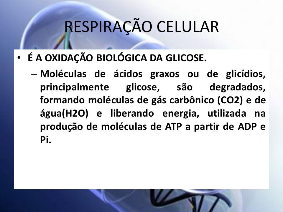 RESPIRAÇÃO CELULAR É A OXIDAÇÃO BIOLÓGICA DA GLICOSE. – Moléculas de ácidos graxos ou de glicídios, principalmente glicose, são degradados, formando m