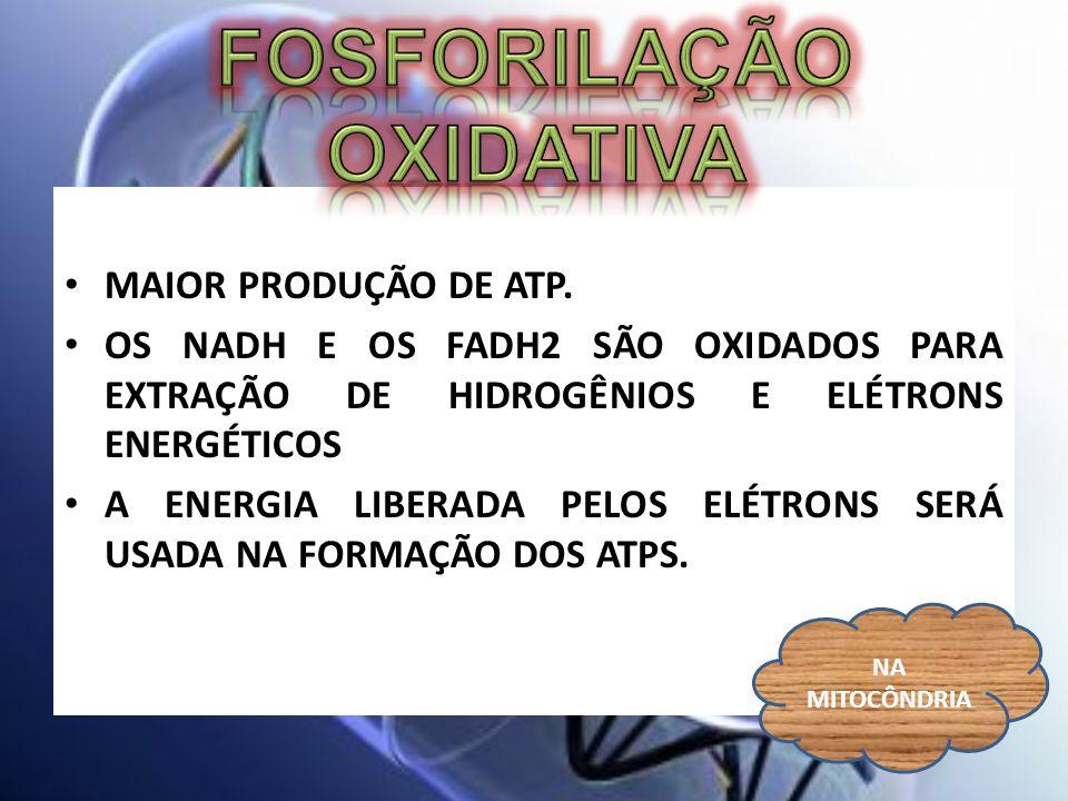 MAIOR PRODUÇÃO DE ATP. OS NADH E OS FADH2 SÃO OXIDADOS PARA EXTRAÇÃO DE HIDROGÊNIOS E ELÉTRONS ENERGÉTICOS A ENERGIA LIBERADA PELOS ELÉTRONS SERÁ USAD