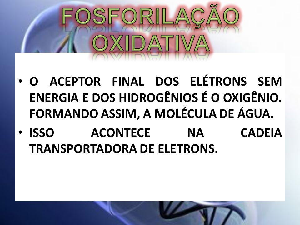 O ACEPTOR FINAL DOS ELÉTRONS SEM ENERGIA E DOS HIDROGÊNIOS É O OXIGÊNIO. FORMANDO ASSIM, A MOLÉCULA DE ÁGUA. ISSO ACONTECE NA CADEIA TRANSPORTADORA DE