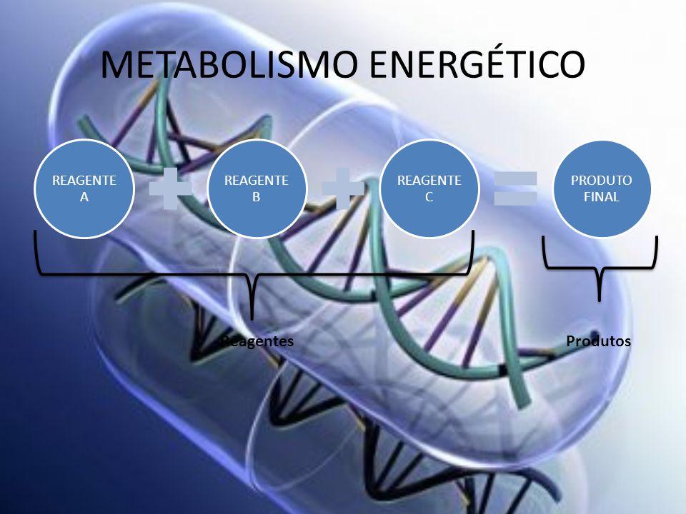 METABOLISMO ENERGÉTICO REAGENTE A REAGENTE B REAGENTE C PRODUTO FINAL ReagentesProdutos