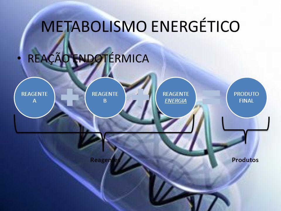 METABOLISMO ENERGÉTICO REAÇÃO ENDOTÉRMICA REAGENTE A REAGENTE B REAGENTE ENERGIA PRODUTO FINAL ReagentesProdutos