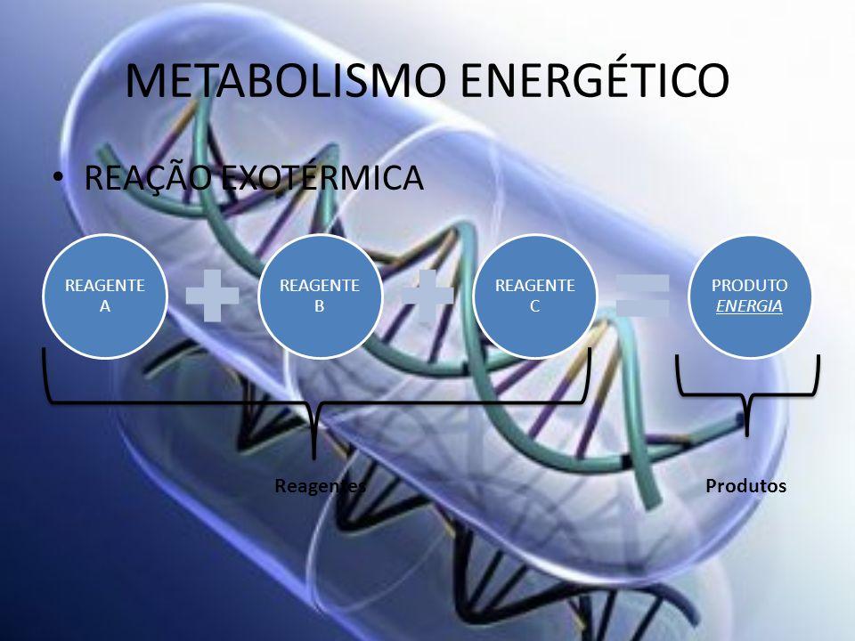 METABOLISMO ENERGÉTICO REAÇÃO EXOTÉRMICA REAGENTE A REAGENTE B REAGENTE C PRODUTO ENERGIA ReagentesProdutos