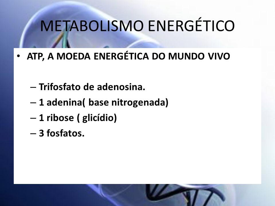 METABOLISMO ENERGÉTICO ATP, A MOEDA ENERGÉTICA DO MUNDO VIVO – Trifosfato de adenosina. – 1 adenina( base nitrogenada) – 1 ribose ( glicídio) – 3 fosf