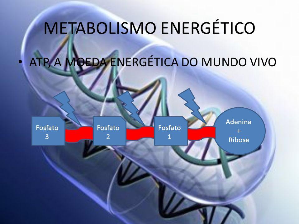 METABOLISMO ENERGÉTICO ATP, A MOEDA ENERGÉTICA DO MUNDO VIVO