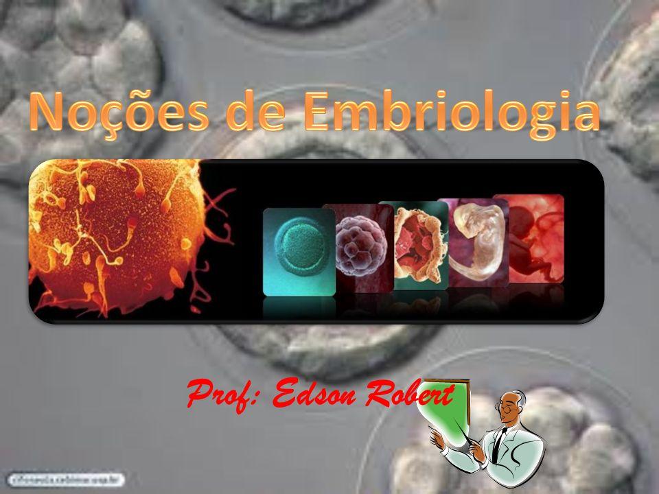 Prof: Edson Robert