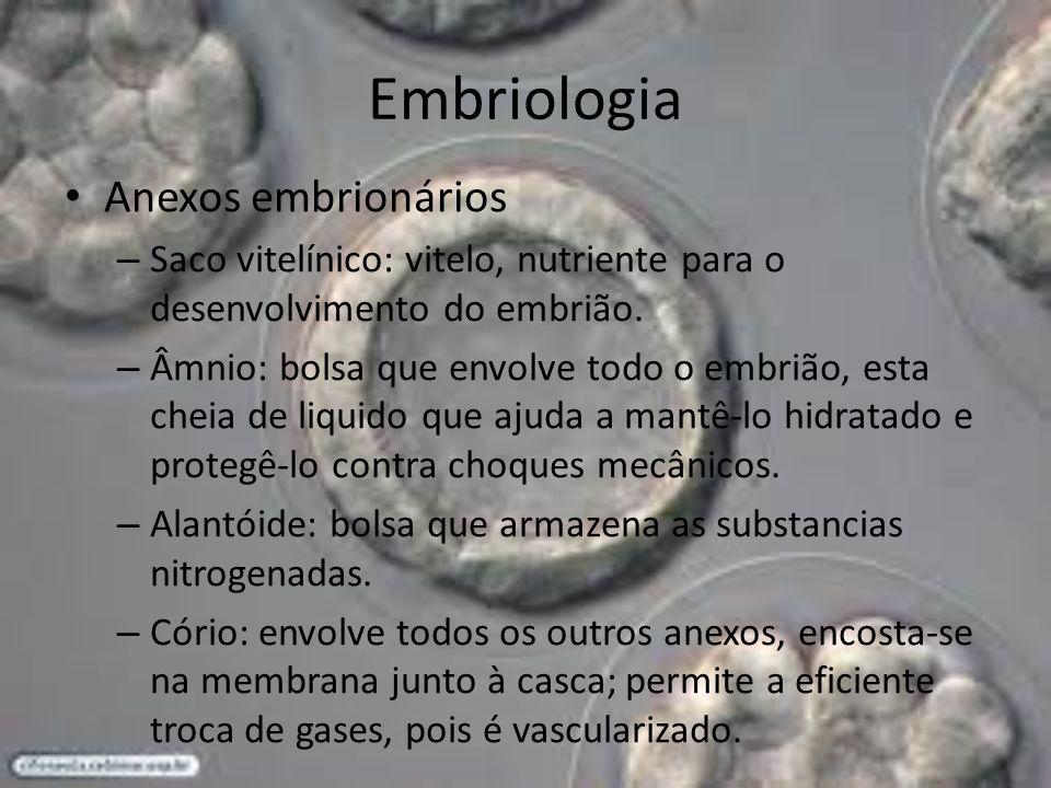 Anexos embrionários – Saco vitelínico: vitelo, nutriente para o desenvolvimento do embrião. – Âmnio: bolsa que envolve todo o embrião, esta cheia de l