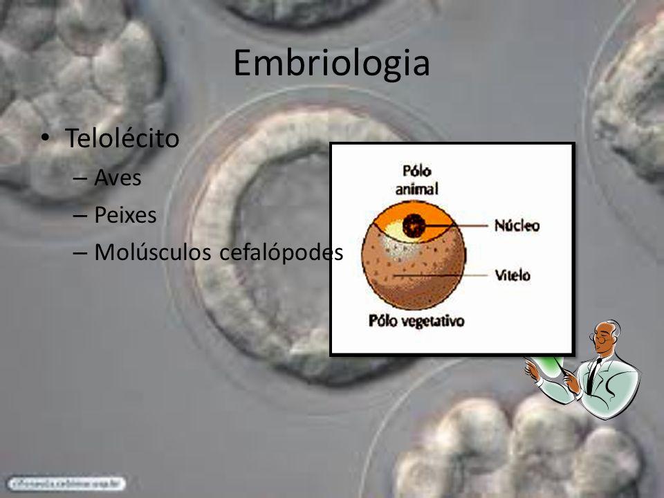 Embriologia Telolécito – Aves – Peixes – Molúsculos cefalópodes