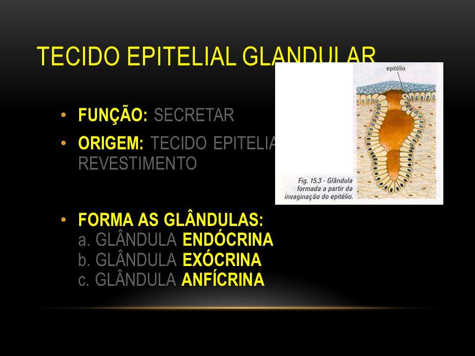 TECIDO EPITELIAL GLANDULAR FUNÇÃO: SECRETAR ORIGEM: TECIDO EPITELIAL DE REVESTIMENTO FORMA AS GLÂNDULAS: a. GLÂNDULA ENDÓCRINA b. GLÂNDULA EXÓCRINA c.