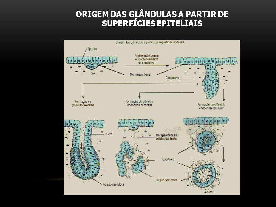 ORIGEM DAS GLÂNDULAS A PARTIR DE SUPERFÍCIES EPITELIAIS