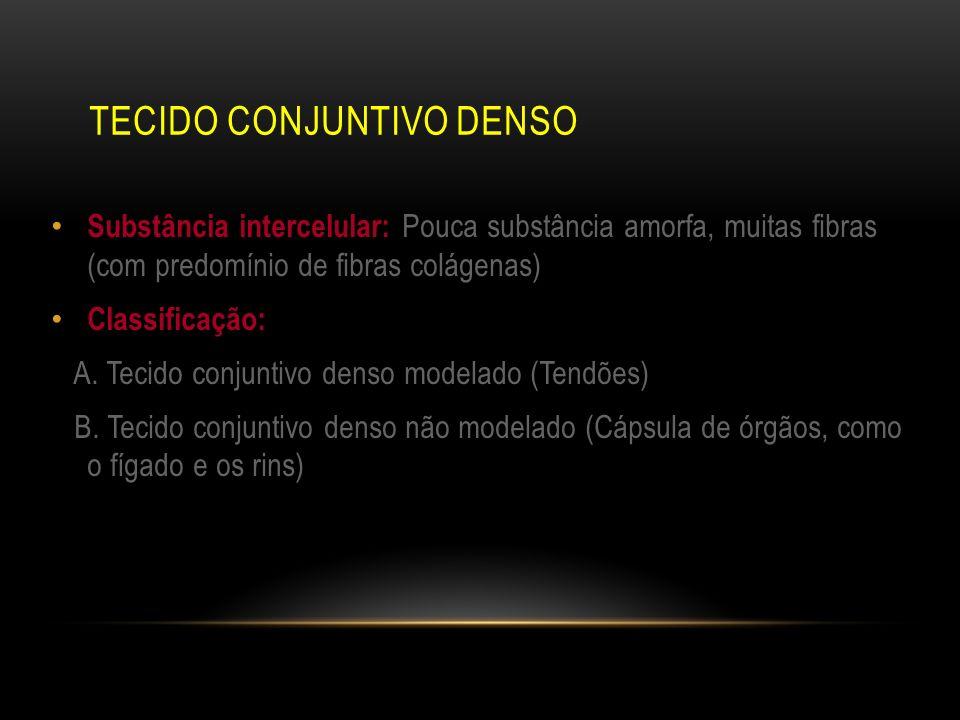 TECIDO CONJUNTIVO DENSO Substância intercelular: Pouca substância amorfa, muitas fibras (com predomínio de fibras colágenas) Classificação: A. Tecido