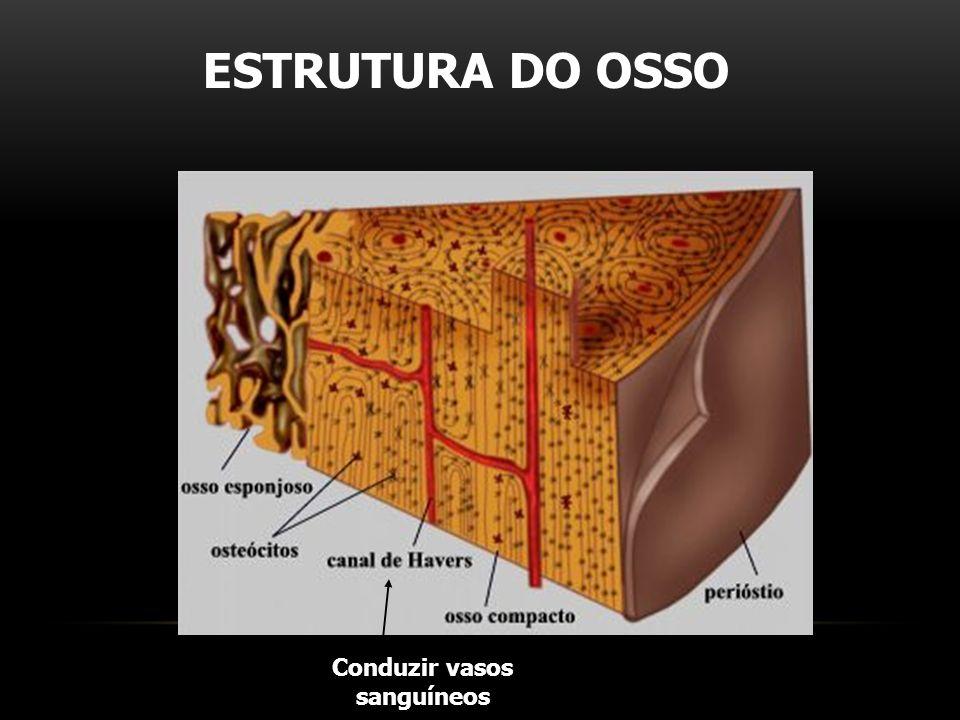 ESTRUTURA DO OSSO Conduzir vasos sanguíneos