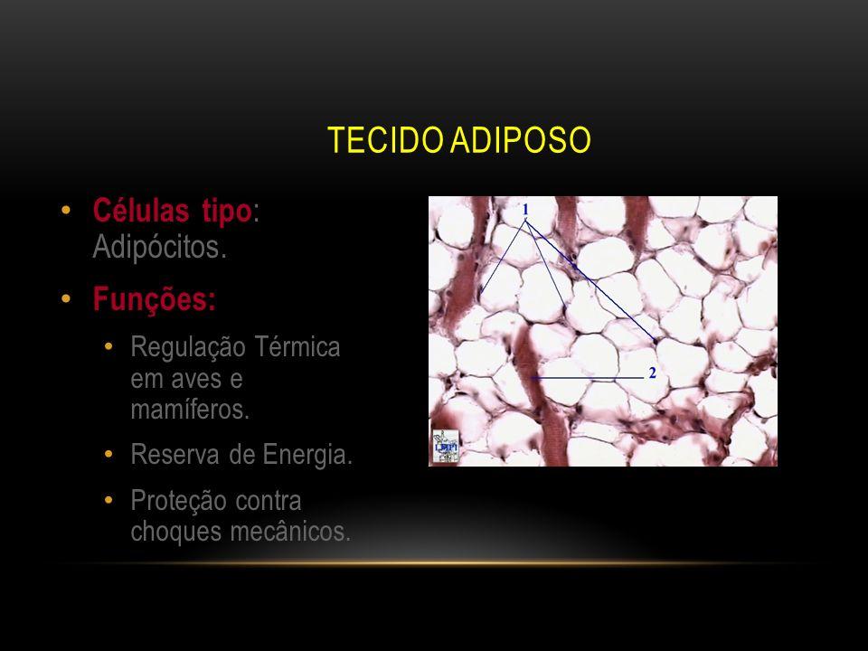 TECIDO ADIPOSO Células tipo : Adipócitos. Funções: Regulação Térmica em aves e mamíferos. Reserva de Energia. Proteção contra choques mecânicos.