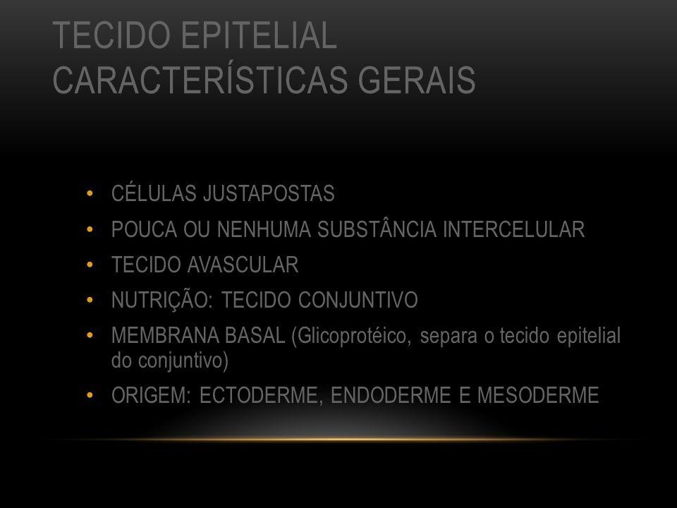 TECIDO EPITELIAL CARACTERÍSTICAS GERAIS CÉLULAS JUSTAPOSTAS POUCA OU NENHUMA SUBSTÂNCIA INTERCELULAR TECIDO AVASCULAR NUTRIÇÃO: TECIDO CONJUNTIVO MEMB
