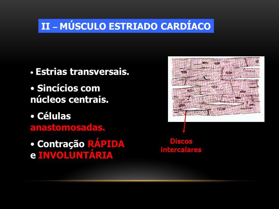 II – MÚSCULO ESTRIADO CARDÍACO Estrias transversais. Sincícios com núcleos centrais. Células anastomosadas. Contração RÁPIDA e INVOLUNTÁRIA Discos int