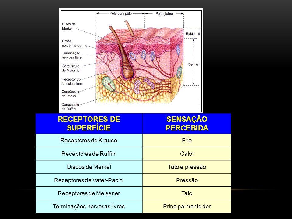 Tipos de Tecido Epitelial: 1.Simples (uma camada de células).
