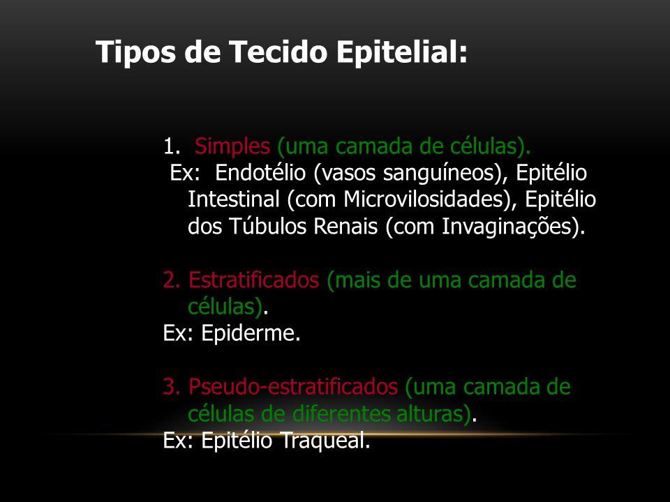 Tipos de Tecido Epitelial: 1. Simples (uma camada de células). Ex: Endotélio (vasos sanguíneos), Epitélio Intestinal (com Microvilosidades), Epitélio