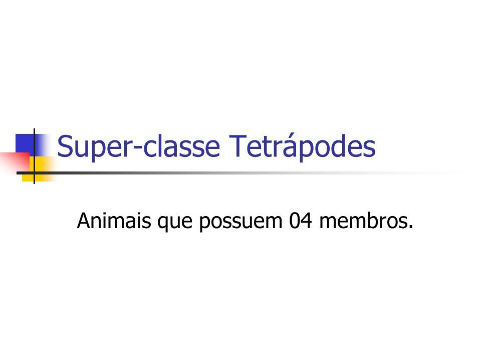 Super-classe Tetrápodes Animais que possuem 04 membros.