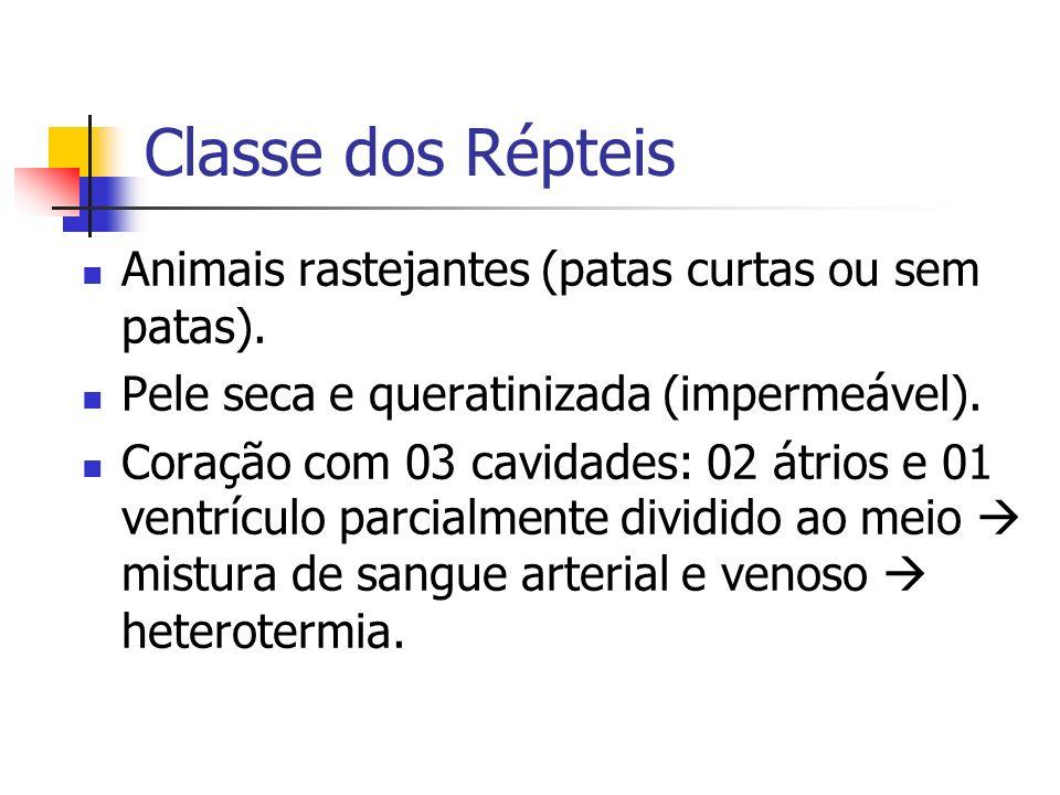 Classe dos Répteis Animais rastejantes (patas curtas ou sem patas). Pele seca e queratinizada (impermeável). Coração com 03 cavidades: 02 átrios e 01