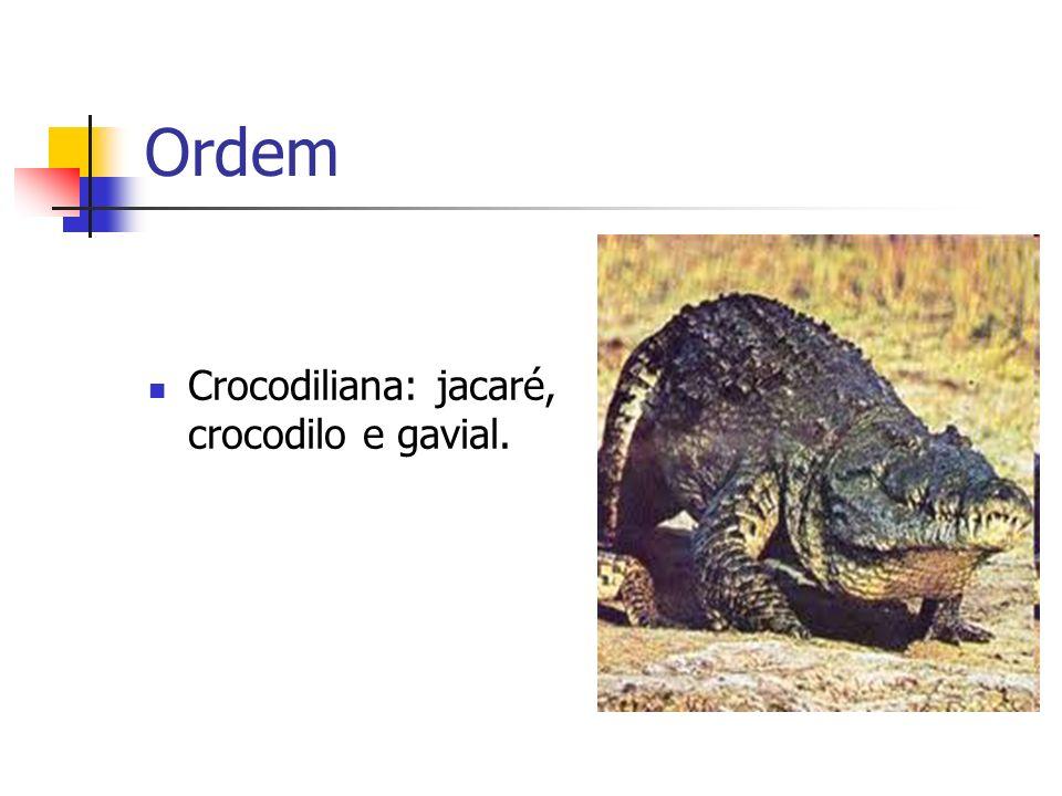 Ordem Crocodiliana: jacaré, crocodilo e gavial.