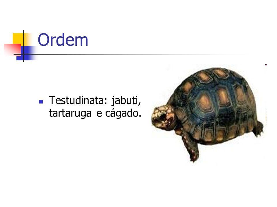 Ordem Testudinata: jabuti, tartaruga e cágado.