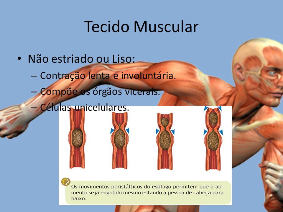 Tecido Muscular Não estriado ou Liso: – Contração lenta e involuntária.