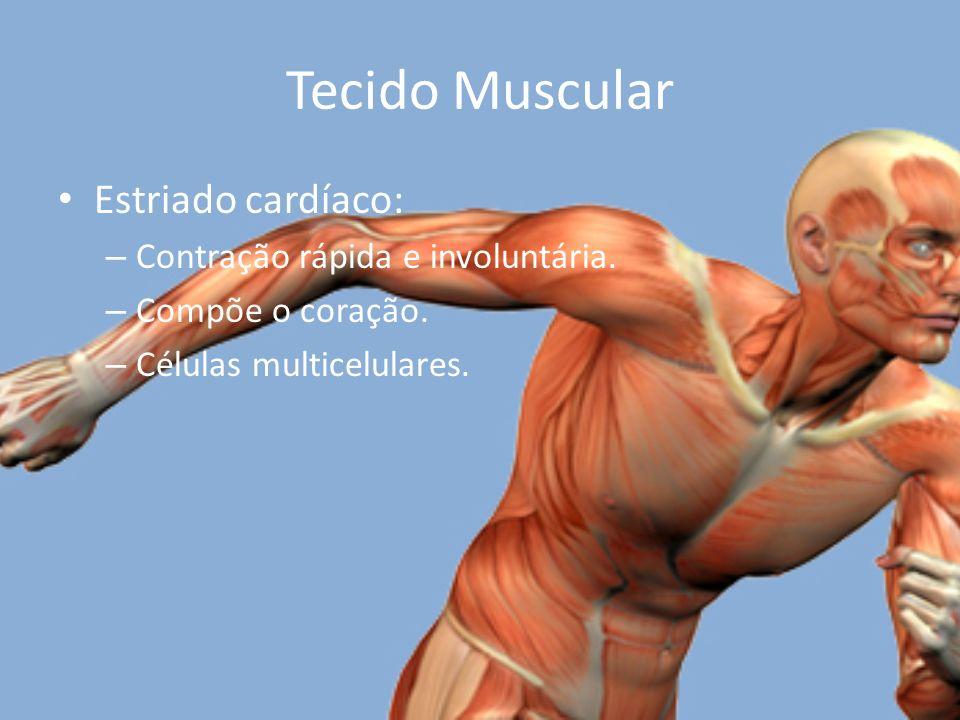 Tecido Muscular Estriado cardíaco: – Contração rápida e involuntária.