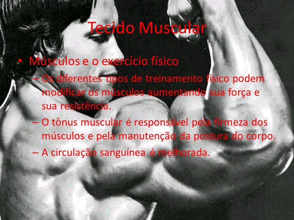 Músculos e o exercício físico – Os diferentes tipos de treinamento físico podem modificar os músculos aumentando sua força e sua resistência.