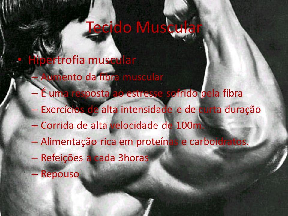 Tecido Muscular Hipertrofia muscular – Aumento da fibra muscular – É uma resposta ao estresse sofrido pela fibra – Exercícios de alta intensidade e de curta duração – Corrida de alta velocidade de 100m.