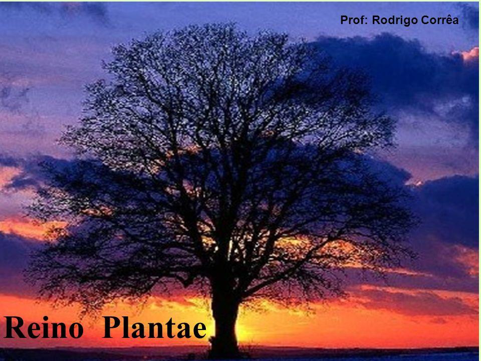Reino Plantae Prof: Rodrigo Corrêa