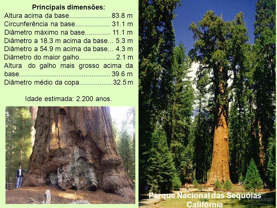 Parque Nacional das Sequóias Califórnia Principais dimensões: Altura acima da base..................... 83.8 m Circunferência na base.................