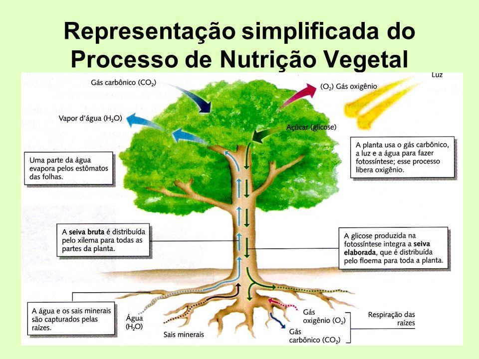 Representação simplificada do Processo de Nutrição Vegetal