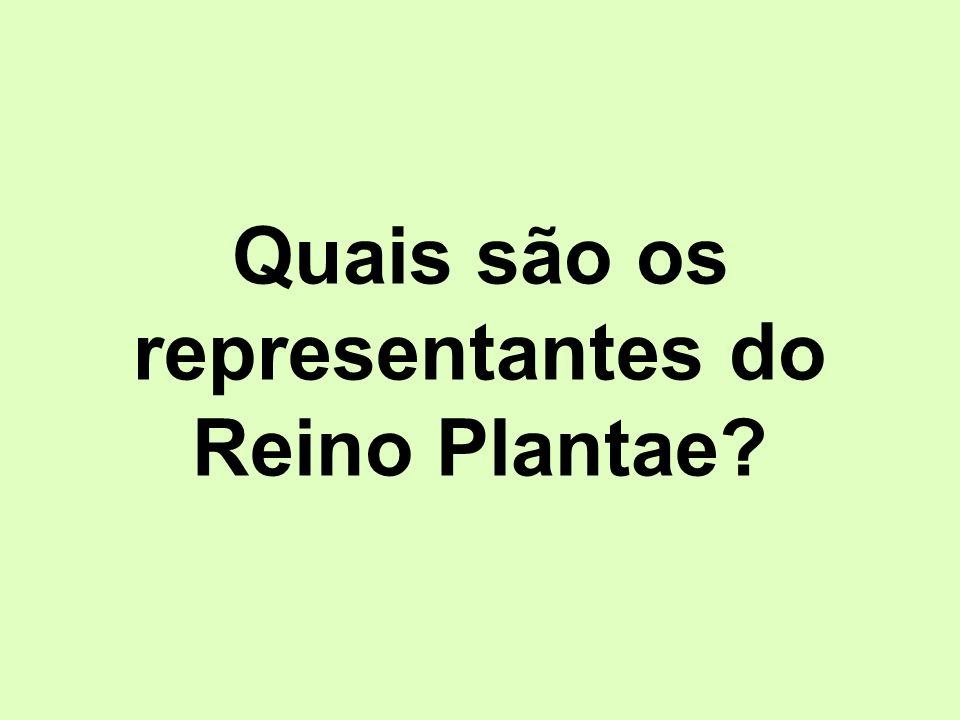Quais são os representantes do Reino Plantae?