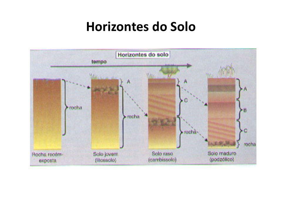 Horizontes do Solo