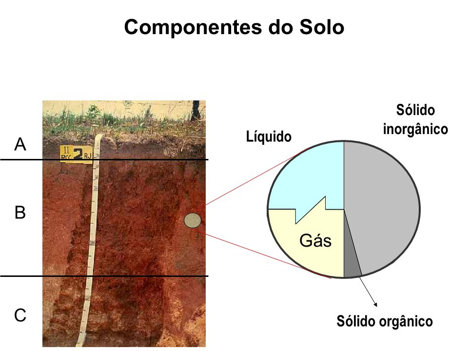 Sólido orgânico Líquido Gás Sólido inorgânico Componentes do Solo A B C
