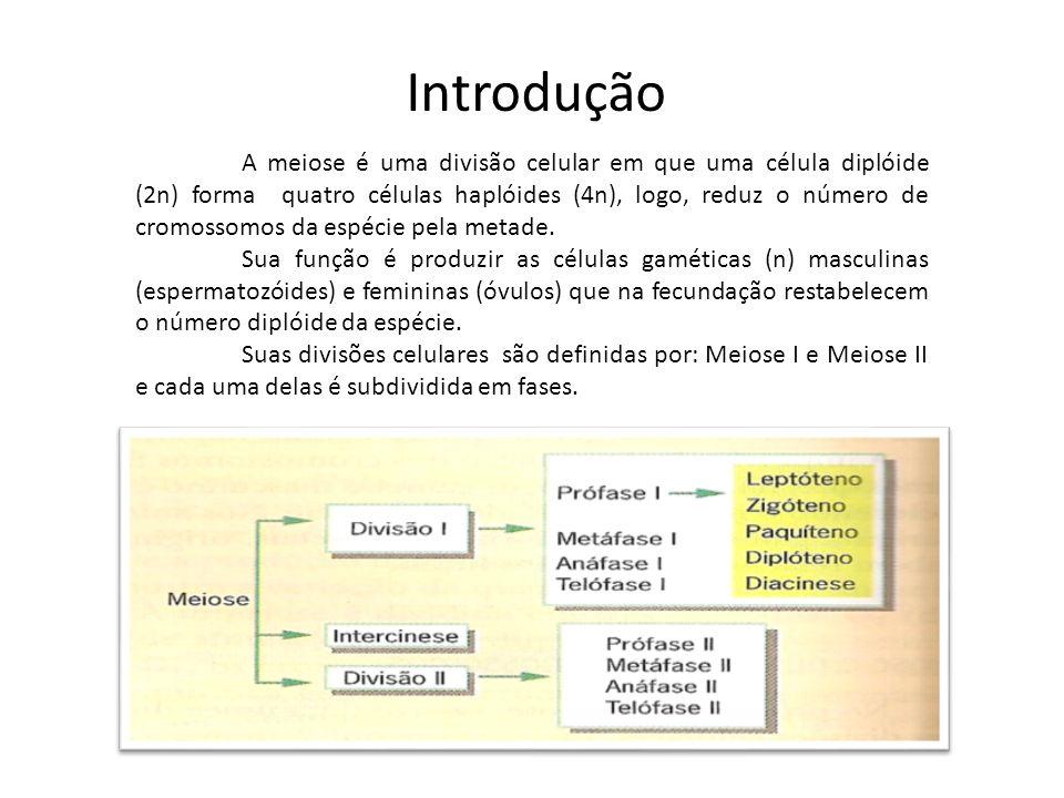 Introdução A meiose é uma divisão celular em que uma célula diplóide (2n) forma quatro células haplóides (4n), logo, reduz o número de cromossomos da