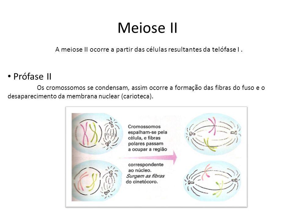 Meiose II Prófase II Os cromossomos se condensam, assim ocorre a formação das fibras do fuso e o desaparecimento da membrana nuclear (carioteca). A me