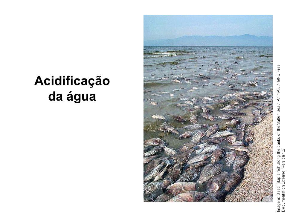 Geografia, 1º ano Problemas ambientais urbanos Acidificação da água Imagem: Dead Tilapia fish along the banks of the Salton Sea / AnimAlu / GNU Free D