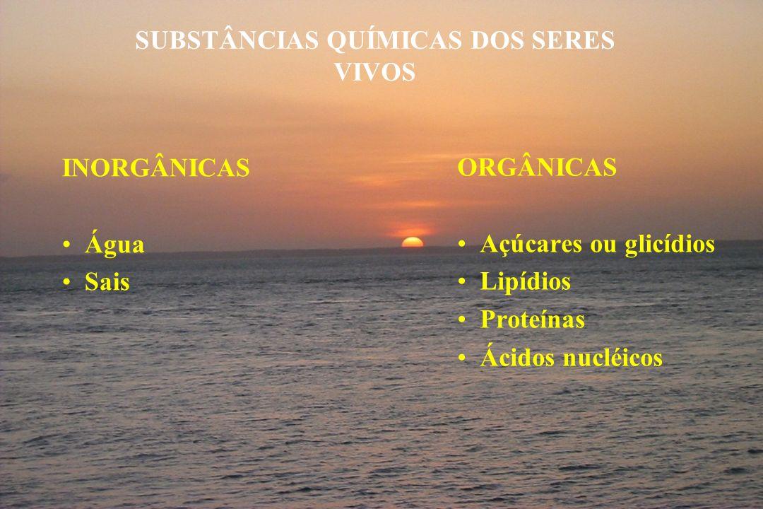 SUBSTÂNCIAS QUÍMICAS DOS SERES VIVOS INORGÂNICAS Água Sais ORGÂNICAS Açúcares ou glicídios Lipídios Proteínas Ácidos nucléicos