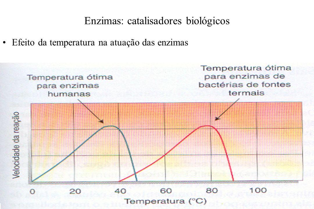 Efeito da temperatura na atuação das enzimas